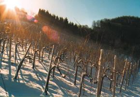 Ca. 1 Ha Weingartenfläche Mit Süd-Osthang
