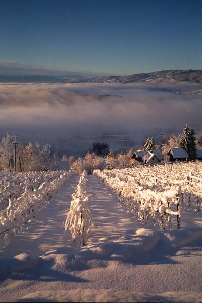 Winterpanorama Südsteiermark